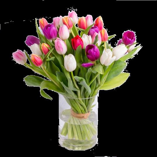 mixed-tulips-550×550-31911